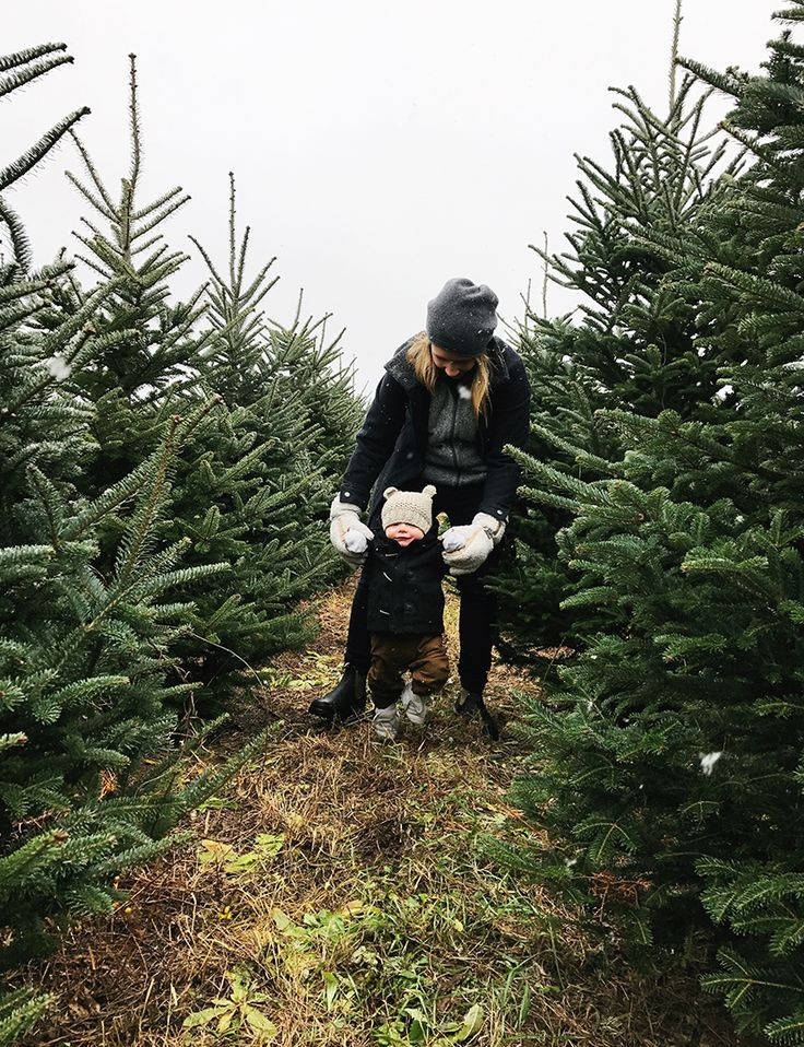 The Family Tree A Christmas Tradition Photo Christmas Tree Christmas Tree Farm Christmas Traditions