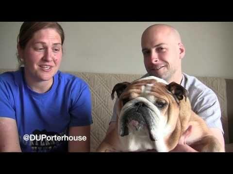 Porterhouseonellen Porterhouse Is An English Bulldog Living In Des
