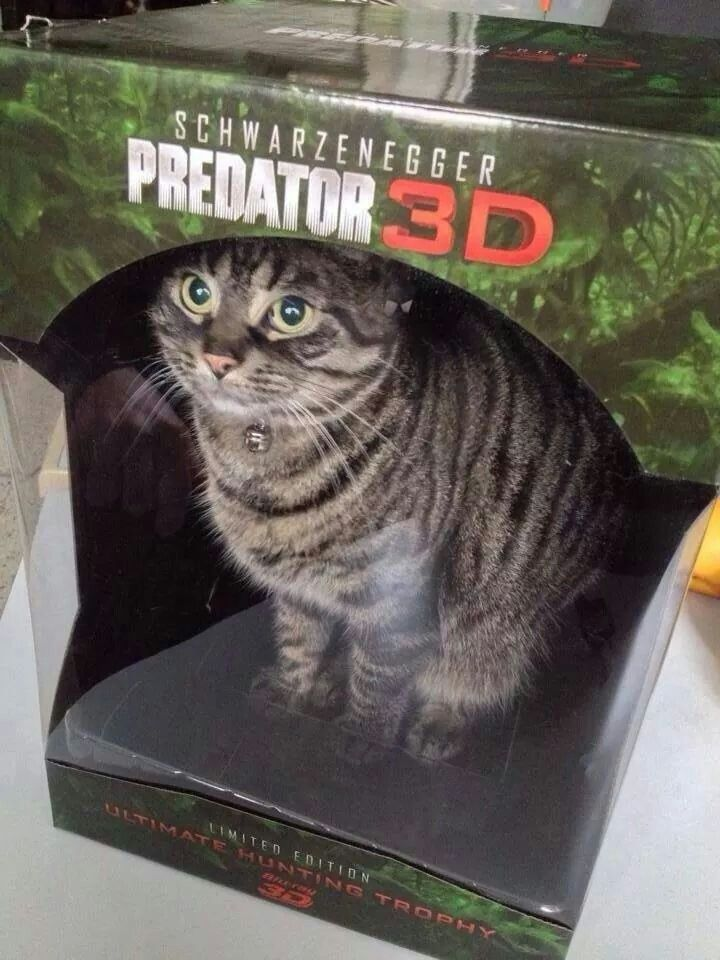 Predator In 3d Cast In Box Cute Animals Funny Cat Memes Cats