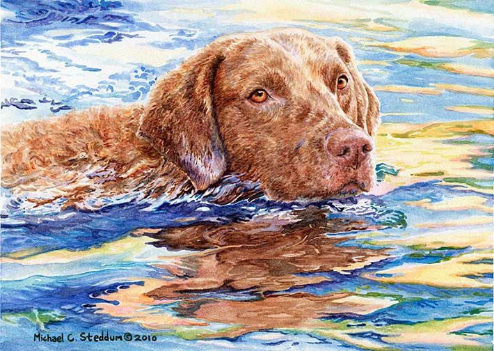 Water Dog A Limited Edition Chesapeake Bay Retriever Print