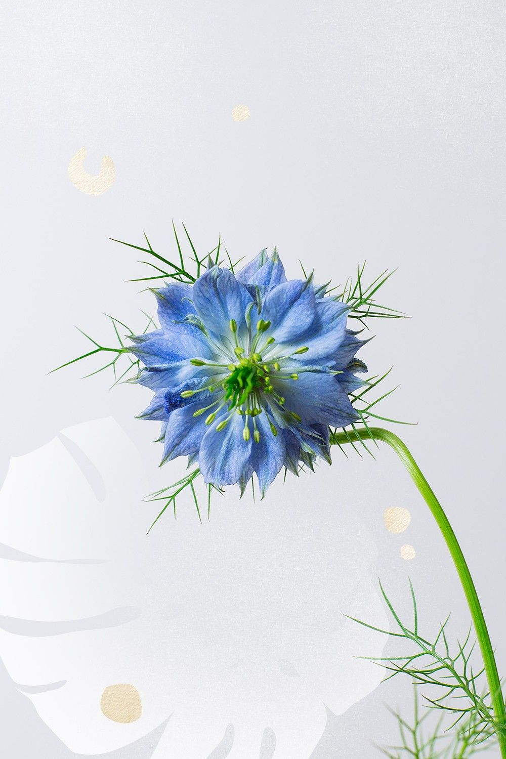 The Meaning Behind Every Flower Decoded Summer Flower Bouquet Flowers Botanical Flowers