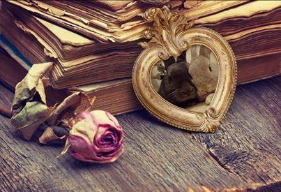 #bunnyvalentines  #ahutchisnotenough  Hoppy Valentine's Day! Love Penny and Leonard xxx xxx   https://www.facebook.com/PennyAndSheldon