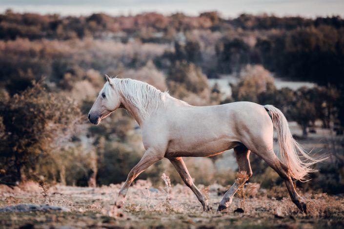 Fotos Pferde In Der Natur I Anna Ibelshauser Pferde Pferde Fotografie Schone Pferde