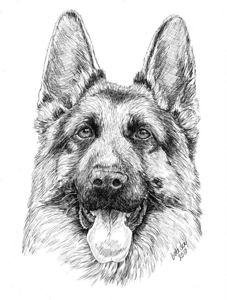 German Shepherd Coloring Pages Best Coloring Pages For Kids German Shepherd Colors Alsatian Dog German Shepherd Painting