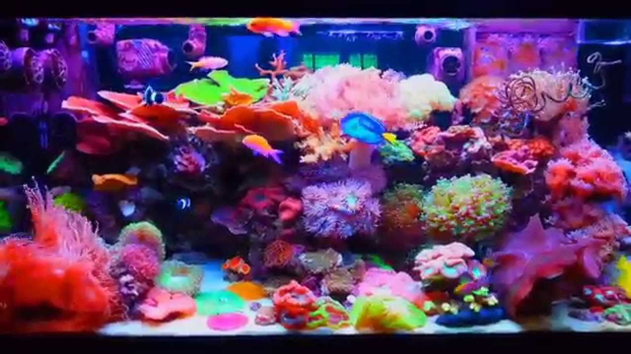 Lps saltwater tank reef aquarium saltwater aquarium and for Reef tank fish