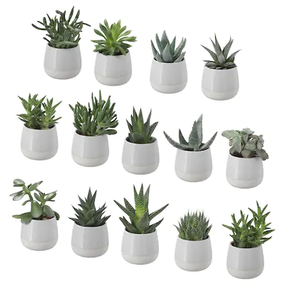 Himalayamix Potted Plant Assorted Species Plants Ikea In 2020 Artificial Potted Plants Planting Succulents Potted Plants