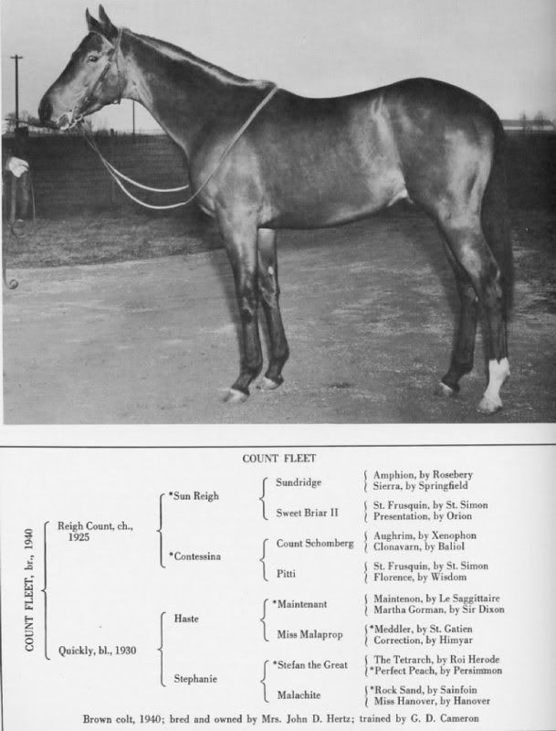 Triple Crown Winners In Conformation Critiques Forum Thoroughbred Horse Racing Derby Horse Horses