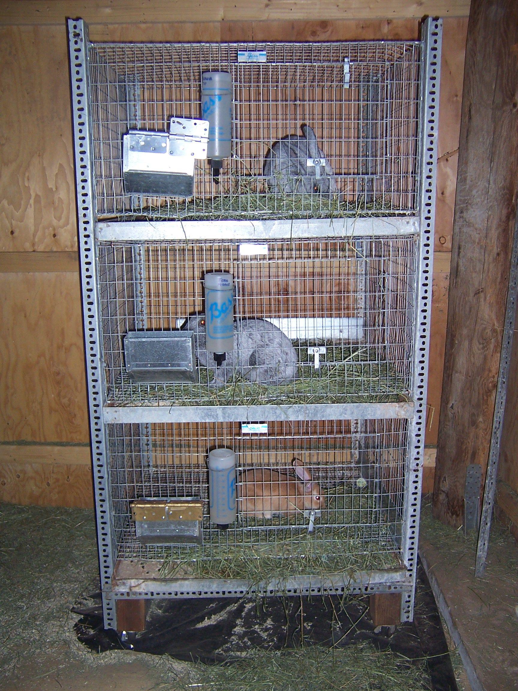 Managing Rabbits Housing And Feeding Rabbit Cages Rabbit Farm