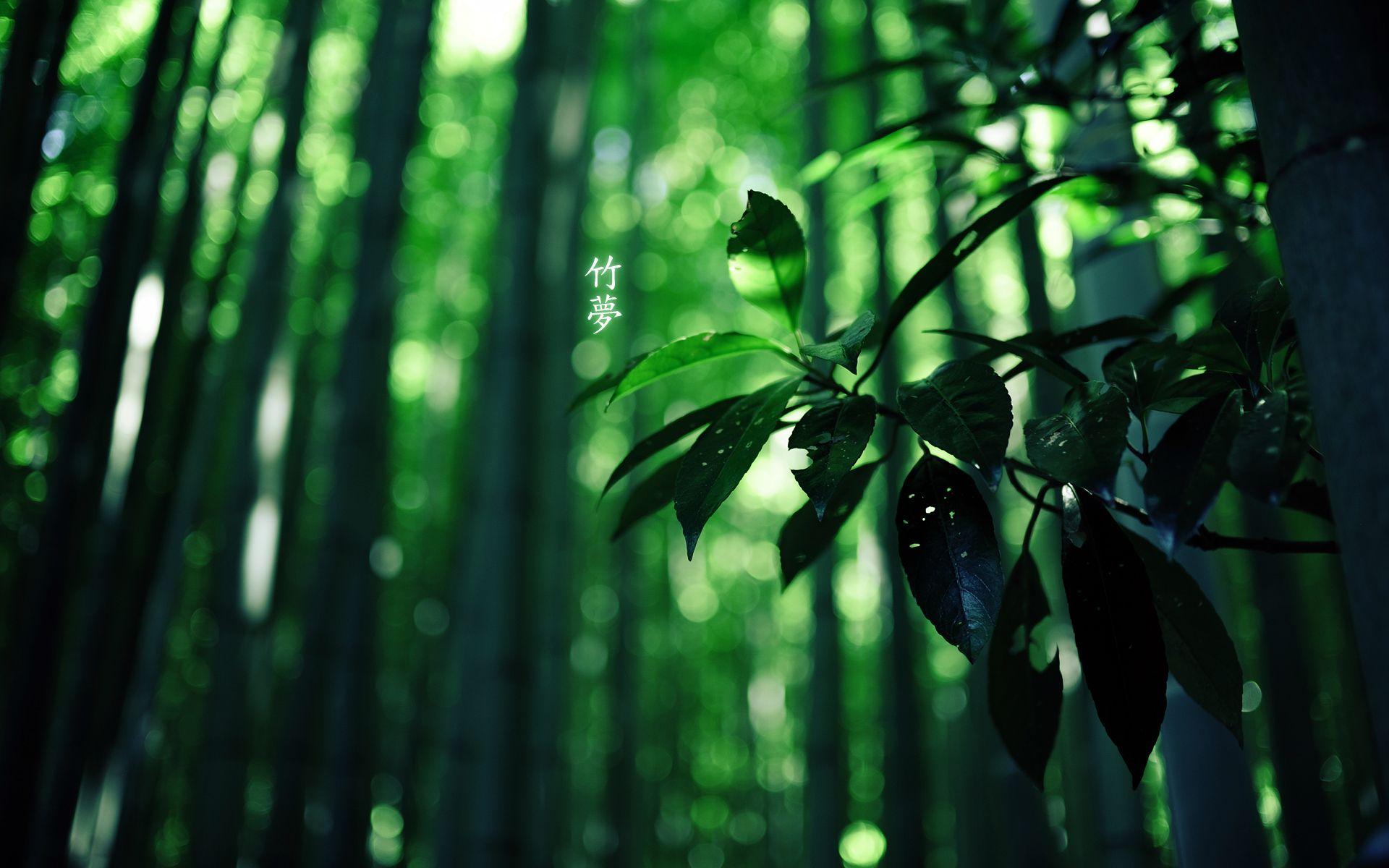 Fond D Ecran Hd Nature Foret Green Leaf Wallpaper Leaf Photography Forest Wallpaper