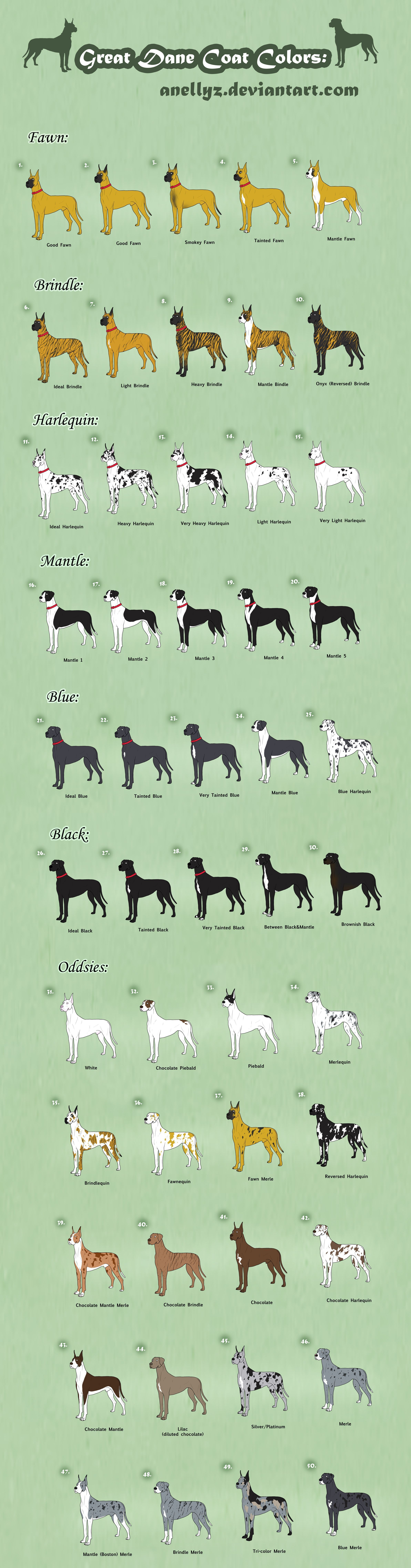 Great Dane Coat Colors Adoptables Closed By Anellyz On