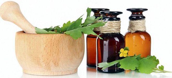 чистотел лечение кожных заболеваний | ЛЕКАРСТВННЫЕ растения ...