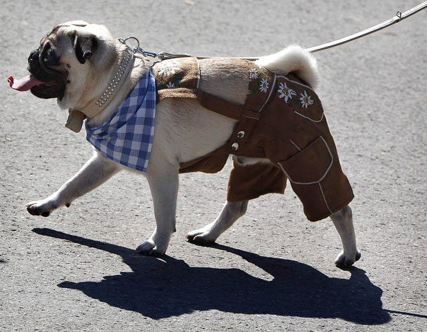 Glenn Beck Bruno And Dogs Ten Best Lederhosen Models Funny