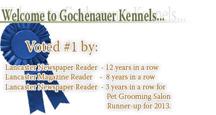 Dog Kennels Lancaster Pa Gochenauer Kennels Dog Kennel Kennel Kennel Boarding