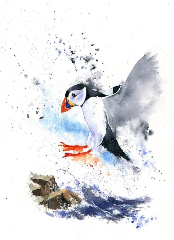 ACEO Limited Edition-Puffin art print of a watercolor