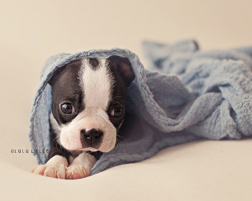 Watch Out Newborn Photography Puppy Photography Is Moving In Newborn Puppies Puppies Puppy Photography