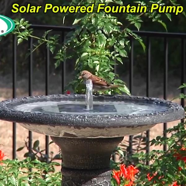 Solar Powered Fountain Pump Video Video In 2020 Solar Powered Fountain Solar Powered Fountain Pump Fountain Pump