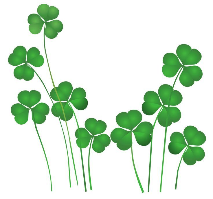 st patricks day shamrocks decor png clipart co ba la pinterest rh pinterest com au shamrocks clip art free shamrocks clip art free