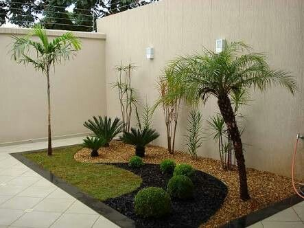 Curved Palm And Small Palms In Rock Garden