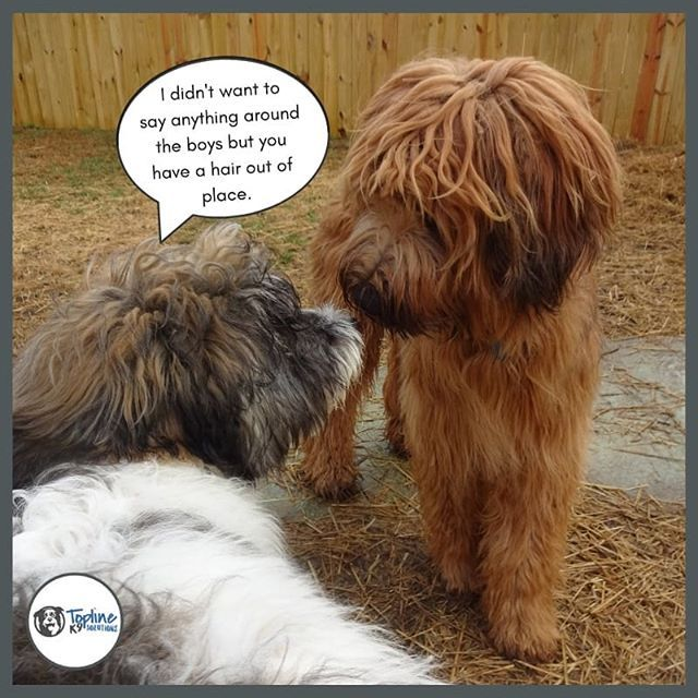 Bad Hair Day⠀ dog dogtraining dogsofinstagram (With