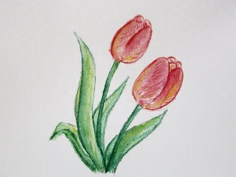 How To Draw A Flower With Simple Colored Pencils Tulip