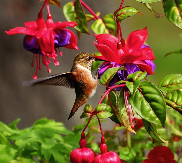 How to create a pollinator-friendly garden   Attract ...