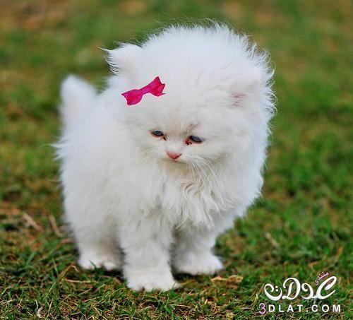 صور قطط باقة مختارة من أروع و أجمل القطط مع خلفيات Hd Cute Animals Animals Baby Animals