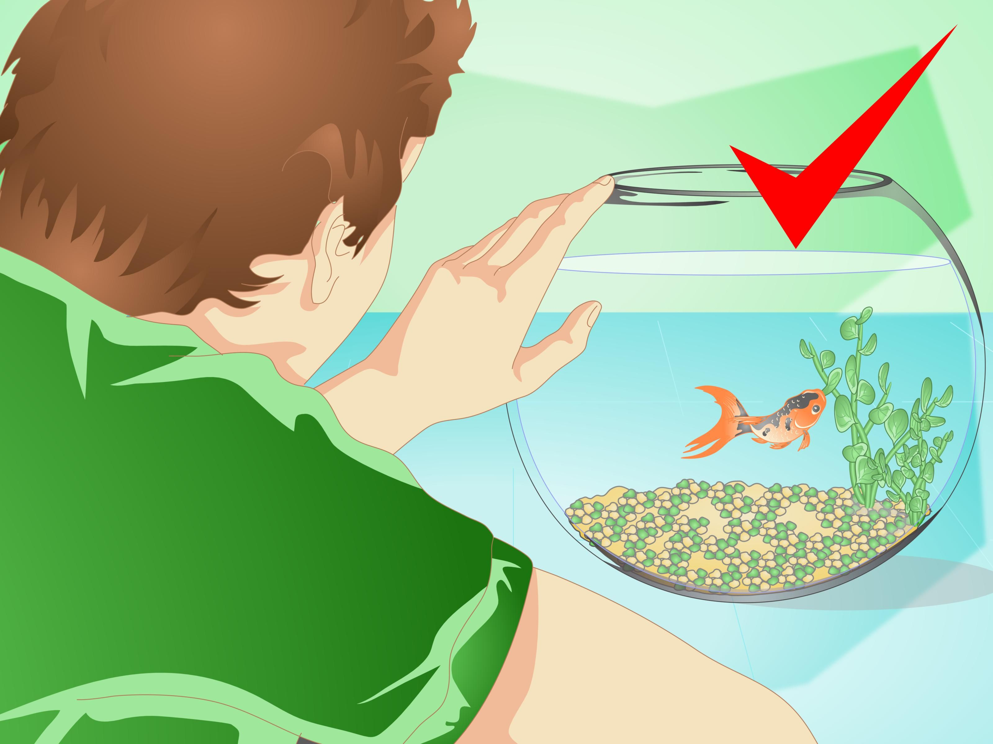 Change the water in a fish bowl goldfish care pet