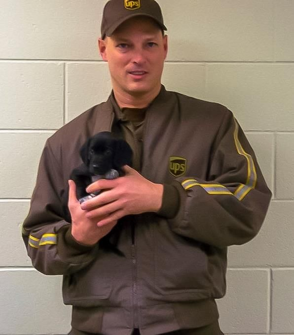 Delivering packages, rescuing puppies, all in a day's work for UPS driver Jerod Armentrout of Wisconsin!   While on route, Jerod noticed a black lump on the side of the road that he thought was a chunk of ice…until it moved. Turns out it was a pair of abandoned pups. One ran towards him, the other cowered under his truck. The tiny packages were given special permission to come back to the UPS distribution center, where they were instantly adopted by UPSers.