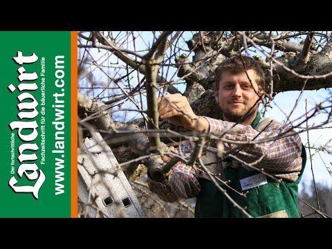 Obstbaume Schneiden Richtig Gemacht Landwirt Com Youtube