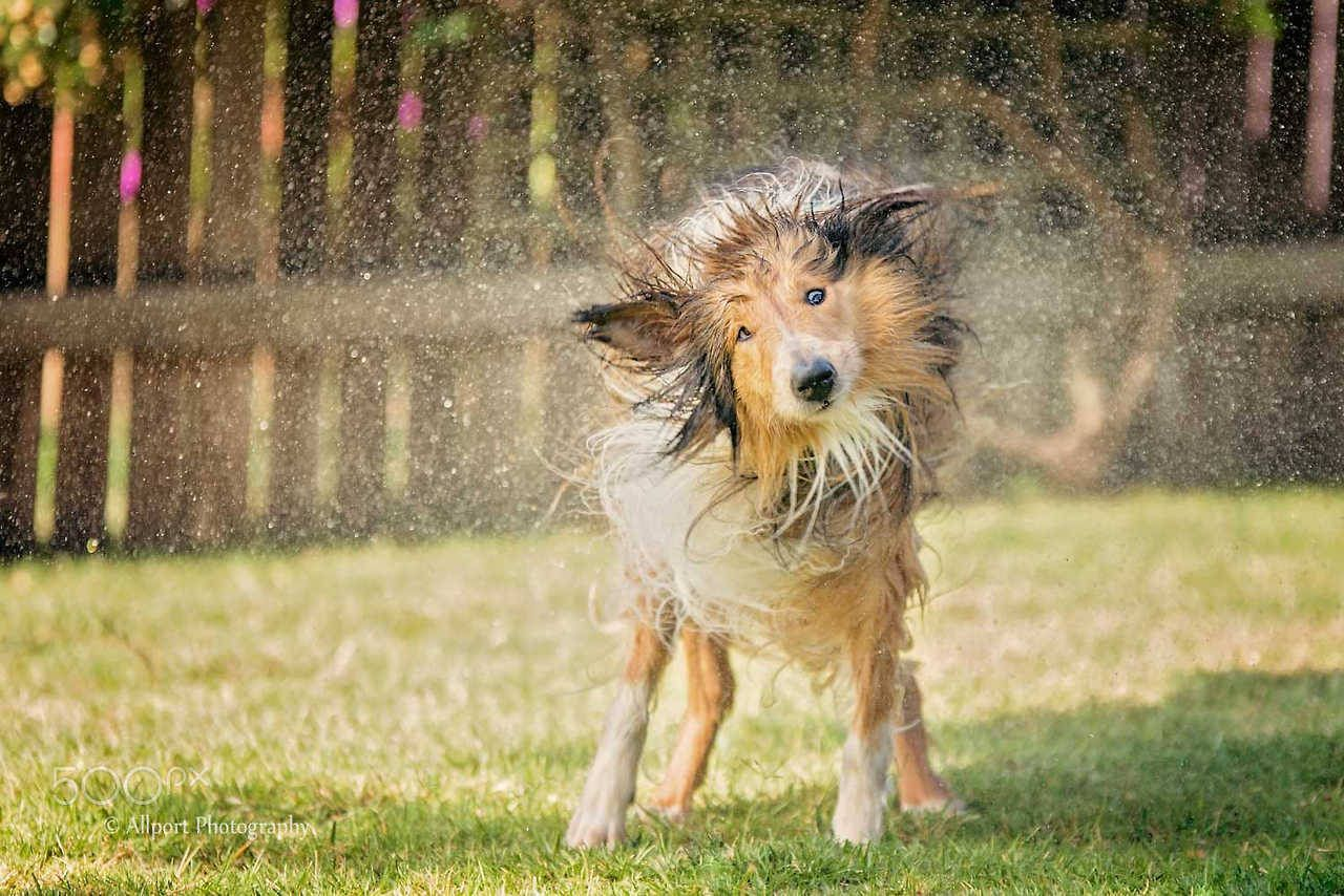 Qualitydogs: Shake It Off by Allport Photography - #dogs #friendly #neighbourhood #queue #the