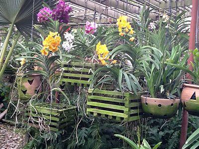 Orchids Garden Design stone orchid garden tropical landscape Image Result For Orchids Garden Design