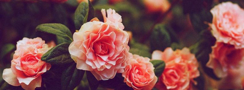 Facebook Cover Photos Nature Flowers With Quotes 12 Facebook Cover Photos Flowers Twitter Cover Photo Facebook Cover Photos Love