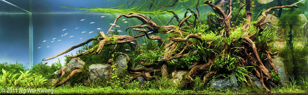 The Nature Aquarium Style Aquascaping Love Nature Aquarium Aquascape Aquarium Landscape