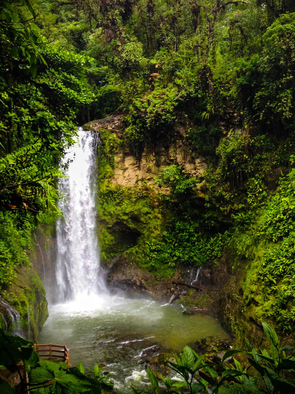 7e594b6c6af31c4e3442bbbc6c4d9a3f - Pura Vida Gardens And Waterfalls Jaco