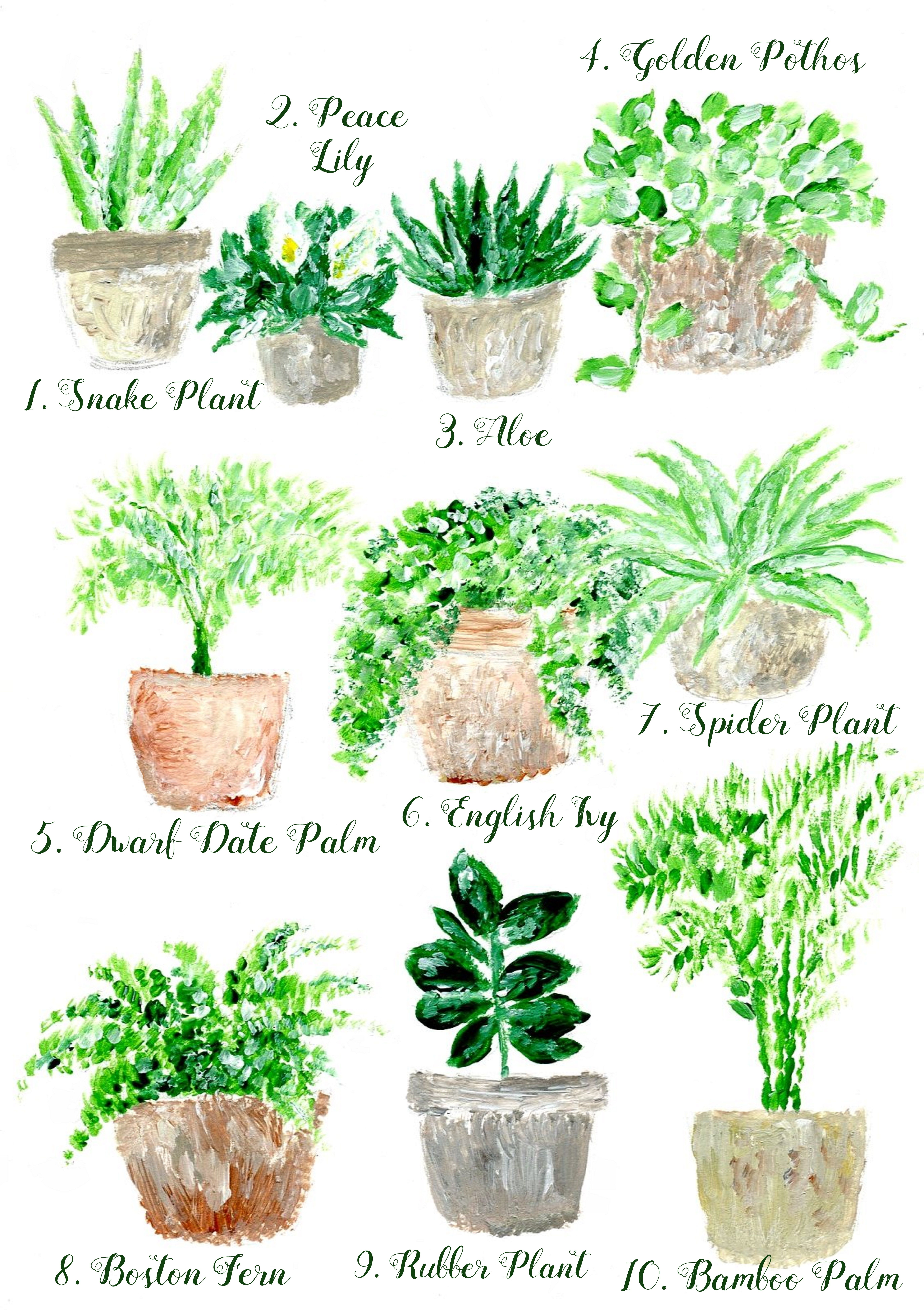 Home plants purifying the air in the apartment