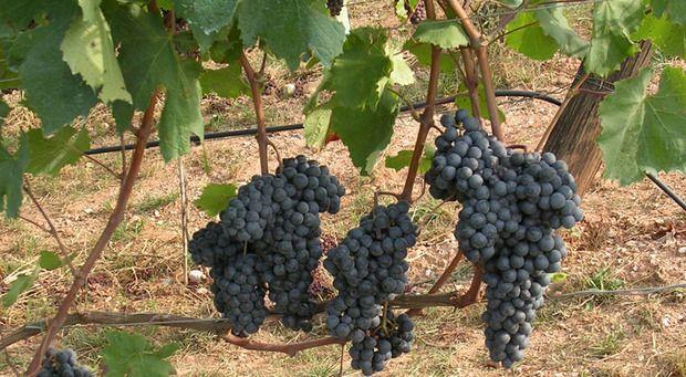 Officina Del Gusto 1 giugno Degustazione Vini Trentini   Pasticceria Garden - Morciano di Romagna (Rimini)