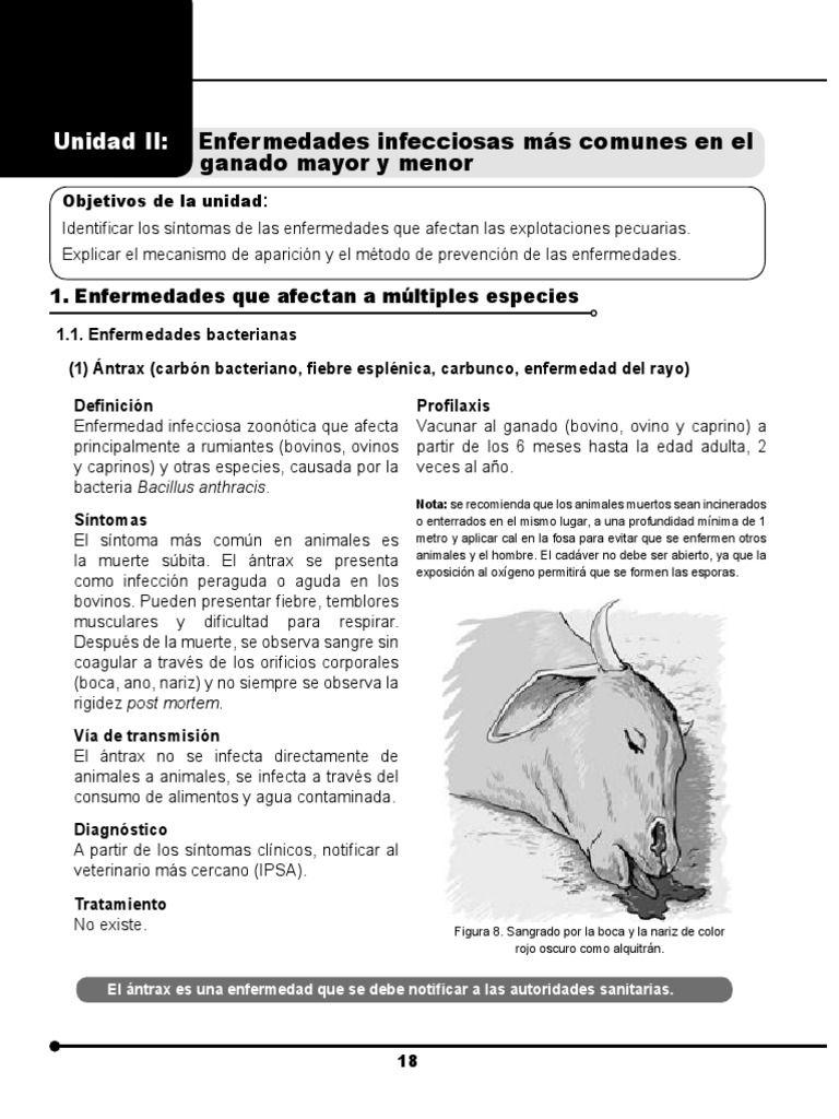 Manual De Sanidad Animal Part2 Pdf ántrax Tuberculosis Sanidad Animal Enfermedades Bacterianas Sanidad