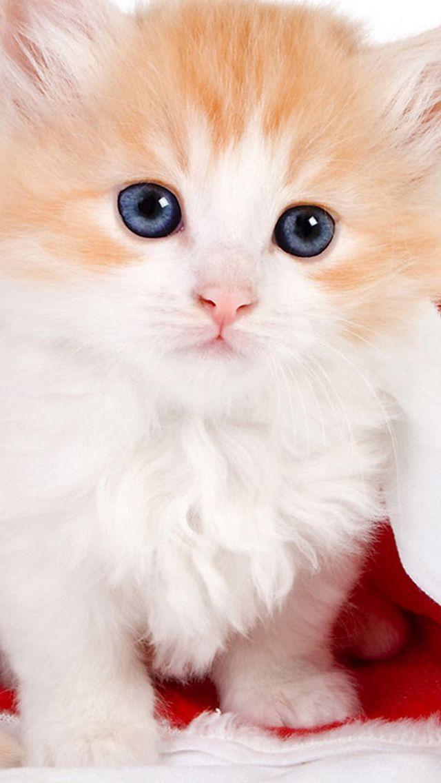 Cute Lovely Christmas Hat Kitten Iphone 5s Wallpaper Cute Cat Wallpaper Puppy Wallpaper Iphone Puppy Wallpaper