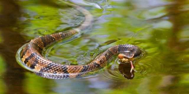 What To Do If You\'re Ever Bitten By a Snake | Garden tips and tricks ...