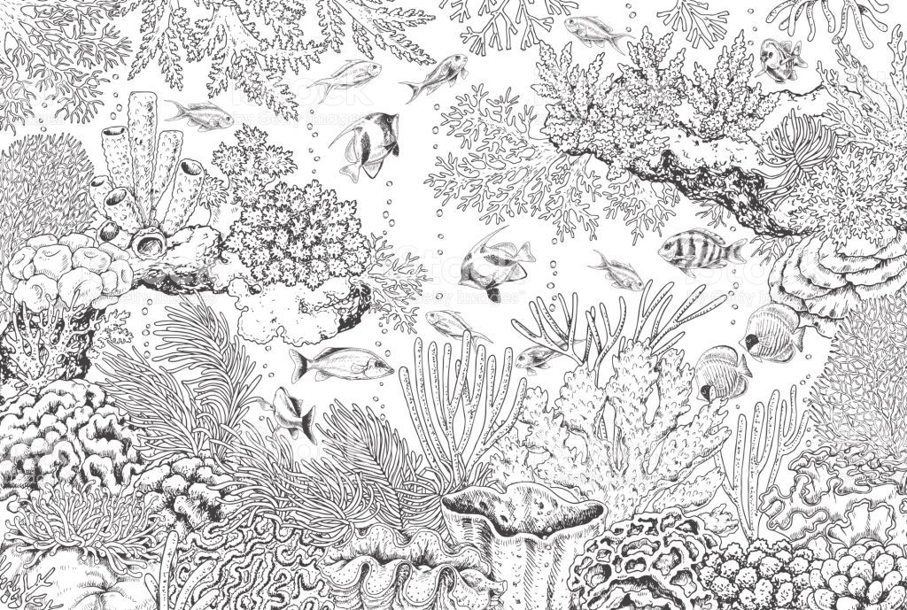Hand drawn underwater natural elements. Seamless line horizontal.. | Coral  reef drawing, Coral drawing, Sea drawing