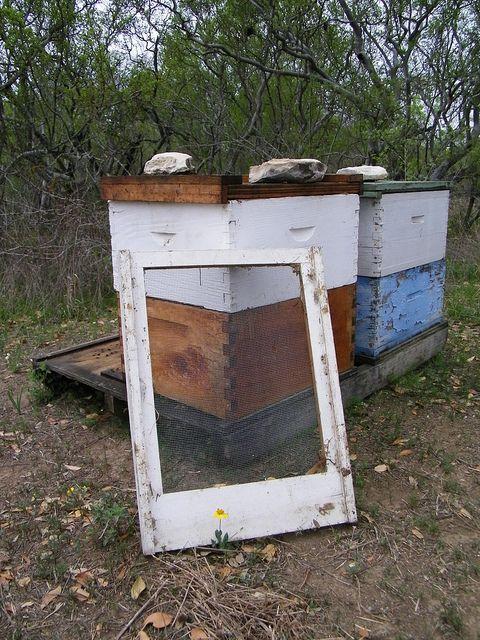 Beekeeping for Beginners Review - apiarist #beekeeping # ...