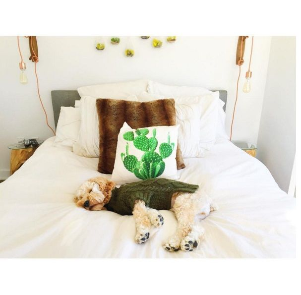 @clarencethecockapoo looks extra cozy in our American Beagle Outfitters