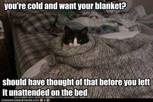 Not Sharing Nope Cat Humor Cats Funny Meme Lolcats Cute