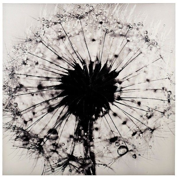 Dandelion Canvas Art Print ($70) ❤ Liked On Polyvore Featuring Home, Home  Decor, Wall Art, Black White Wall Art, Canvas Wall Art, Stretched Canvas,  Canvas ...