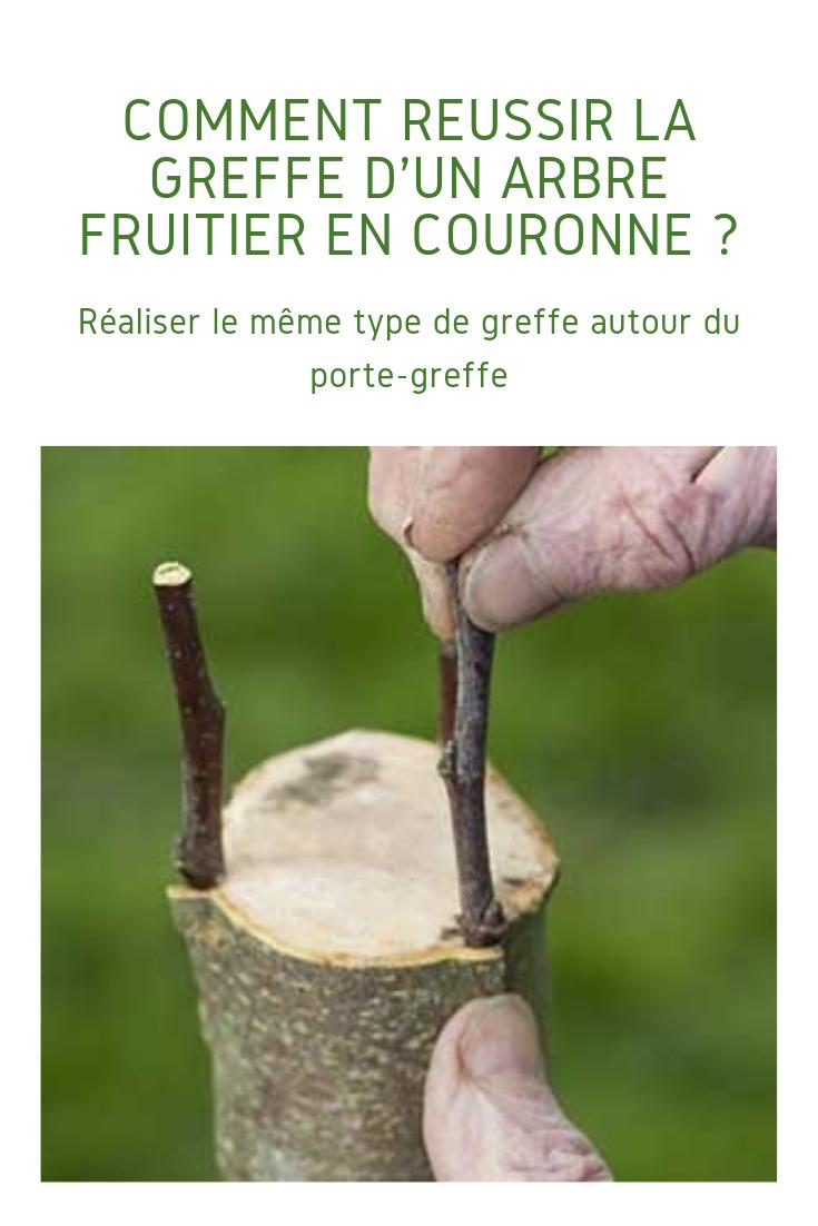 Comment Greffer Un Arbre Fruitier En Couronne Pas A Pas Arbre Fruitier Porte Greffe Arbre
