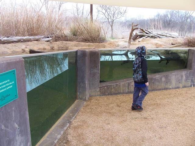 Charming Trinity River Audubon Center   Outdoor Aquarium