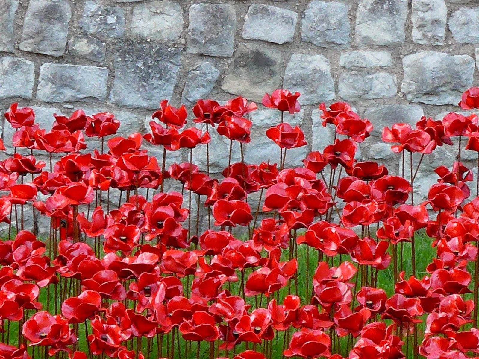 """These poppies were created by ceramic artist, Paul Cummins and is entitled """"Blood Swept Lands and Seas of Red"""" - Tower of London, 2014"""