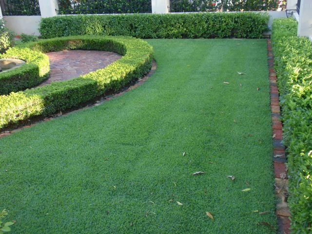 Developed From A Seed Mix Of Top Rated Stri Cultivars Our