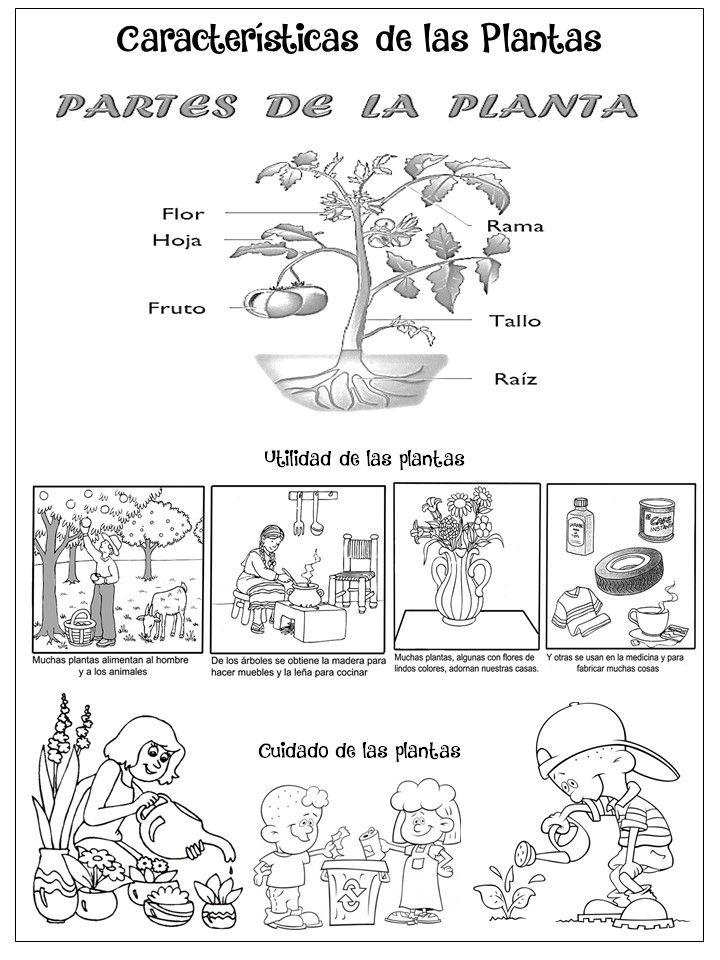 Características De Las Plantas Caracteristicas De Las
