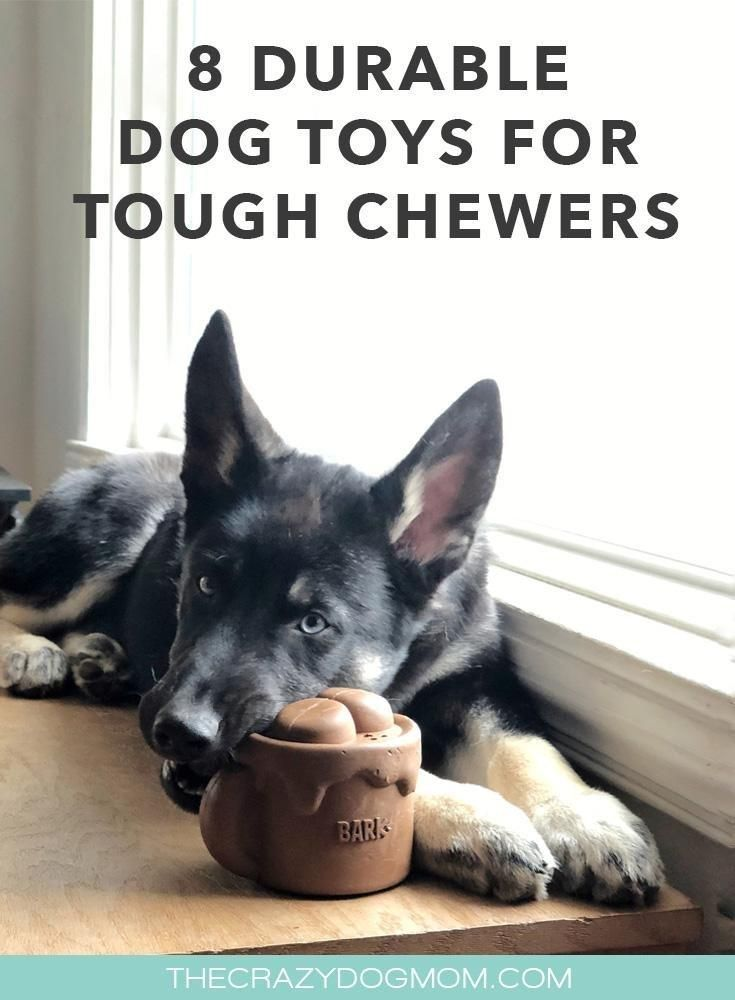 8 Durable Dog Toys For Tough Chewers Durable Dog Toys Tough Dog